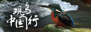 守护湿地迎接候鸟-观鸟中国行走进保护区