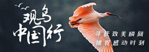 观鸟中国行