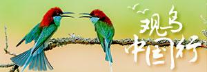 2020观鸟中国行