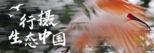 2021观鸟中国行